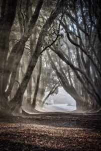 Beautiful archway through a misty forest